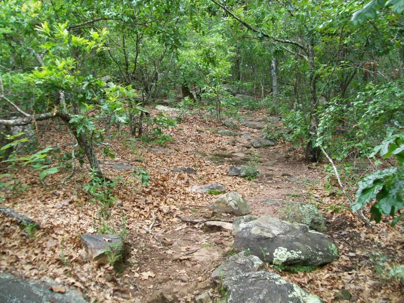 Pine Mountain Trail Woods