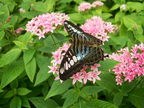nature butterfly flower garden