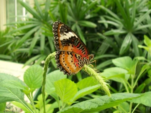 nature butterfly flower garden